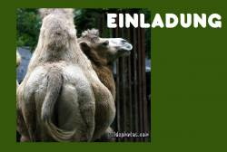 Einladung Kamel