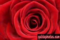 einladungskarte-rose_1