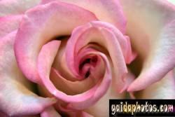einladungskarte-rose_2