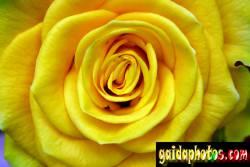 einladungskarte-rose_4