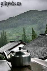 einladungskarte-teeplantage
