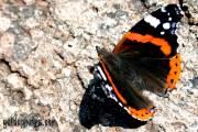 Kommunion Motiv Schmetterling