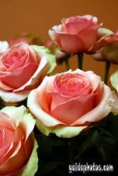 Kommunion Motiv Rose, pink, weiß