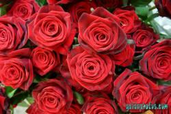 Kommunion Motiv Rose, rot