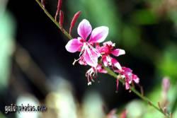 Zweig rote Blüte