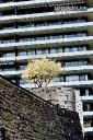 Bilder, Haus, Hochhaus, Kirschbaum