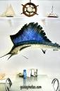 schwertfisch-gaidaphotos