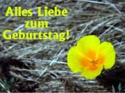 Geburtstagskarte Mohnblume gelb