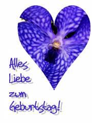 Orchidee, herz, blau
