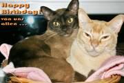 Geburtstagskarte Katze Burmese