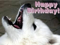 Geburtstagskarte Hund Englisch