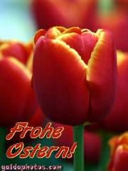 Kostenlose Ostergrusskarten Tulpe rot