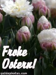 Kostenlose Ostergrusskarten Tulpe, weiss,