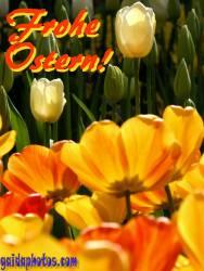Kostenlose Ostergrusskarten gelb, Tulpe,