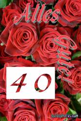 40. rote Rosen