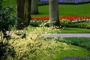 Osterbilder, Osterblumen,