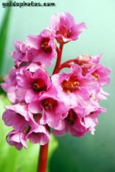 Osterbilder, Osterblumen, Hyazinthe,