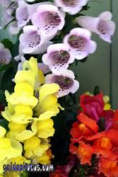 Kommunion, konfirmation, Blüte, Frühlingsblüte