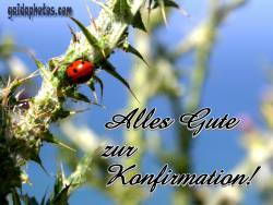 konfirmationskarte Marienkäfer