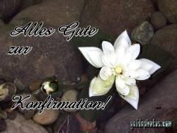 konfirmationskarte Lotusblume