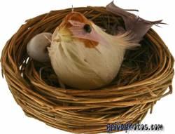 kostenlose Osterbilder Vogelnest
