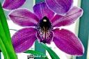 Liebesbrief zum Valentinstag: Orchideenbilder