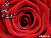 Ich liebe dich Rose