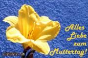 Muttertagskarte, Ecard, blume gelb blau