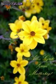 Muttertagskarte, Ecard, narzissen gelb