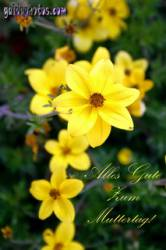 narzissen gelb