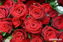muttertagskarte rote rosen