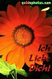 Blüte rot, Ich liebe Dich