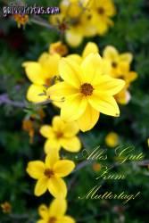 Muttertagskarte Narzissen gelb