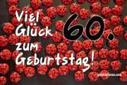 60 Marienkäfer