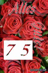 75. rote Rosen