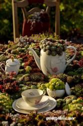 Bio Kaffekränzchen