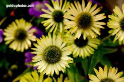 Blüten gelb