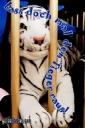 vatertag ecard tiger
