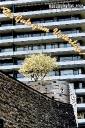 vatertagskarten-hochhaus-kirschbaum-gaidaphotos
